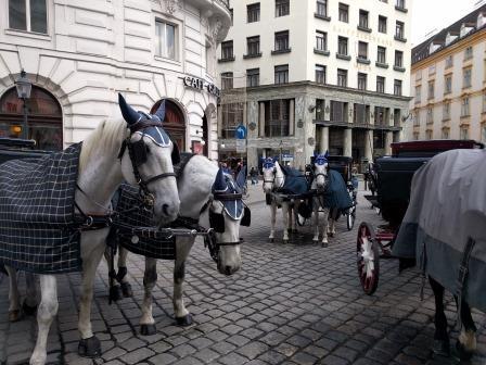 כרכרות סוסים בוינה